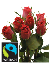 Fairtrade-Rosen